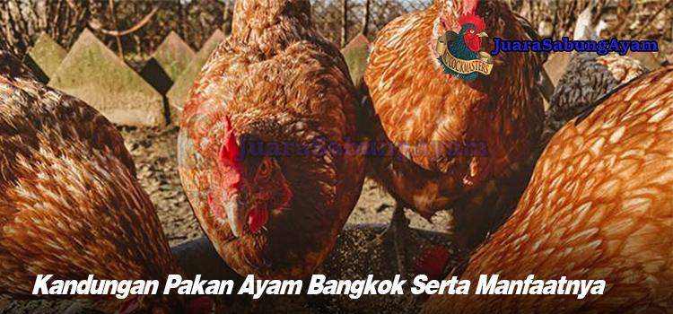 Kandungan Pakan Ayam Bangkok Serta Manfaatnya