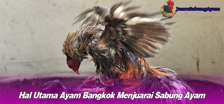 Hal Utama Ayam Bangkok Menjuarai Sabung Ayam