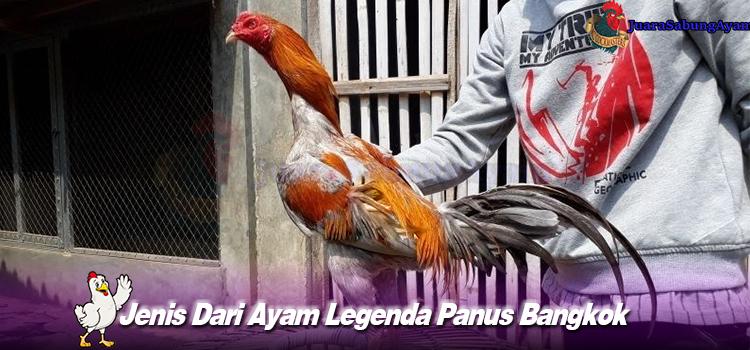 Jenis Dari Ayam Legenda Panus Bangkok