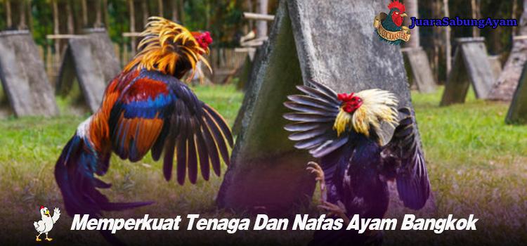 Memperkuat Tenaga Dan Nafas Ayam Bangkok