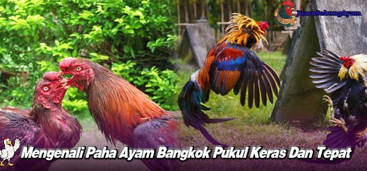Mengenali Paha Ayam Bangkok Pukul Keras Dan Tepat