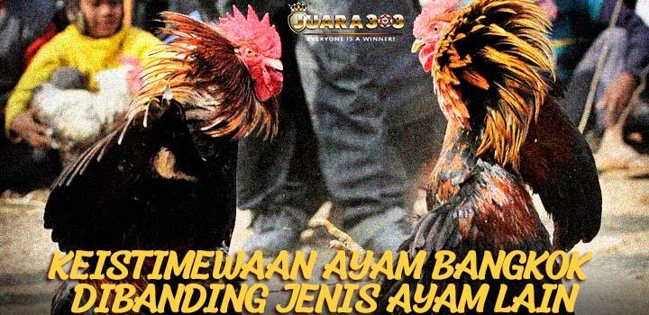 Keistimewaan Ayam Bangkok Dibanding Jenis Ayam Lain