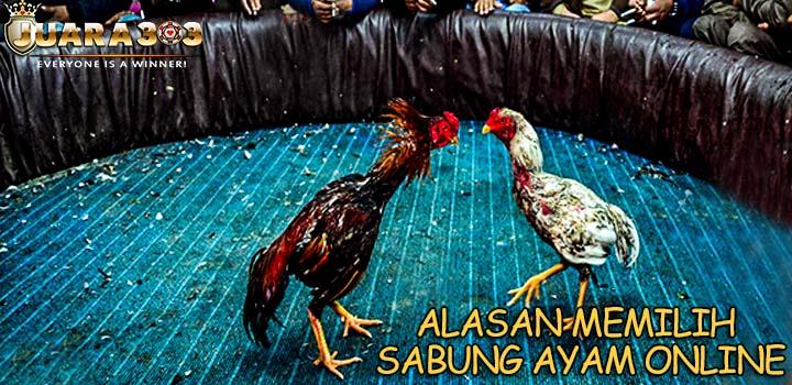 Alasan Memilih Sabung Ayam Online