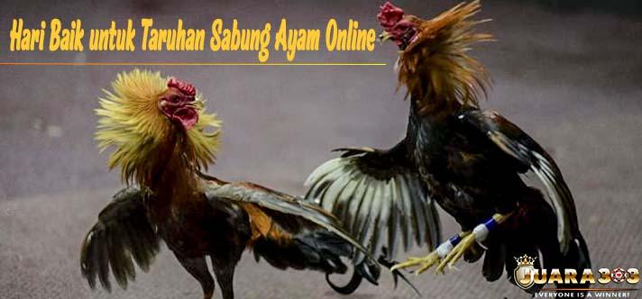 Hari Baik untuk Taruhan Sabung Ayam Online