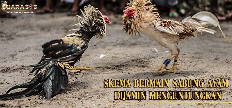 Skema Bermain Sabung Ayam Dijamin Menguntungkan