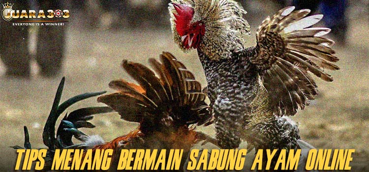 Tips Menang Bermain Sabung Ayam Online
