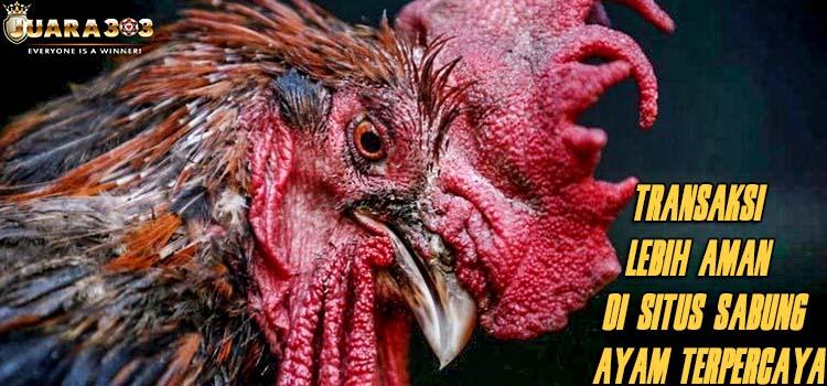 Transaksi Lebih Aman Di Situs Sabung Ayam Terpercaya